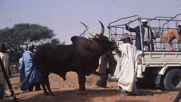 HERDSMEN AND FARMERS CONFLICT IN NIGERIA: A THREAT TO PEACEBUILDING AND HUMAN SECURITY IN WEST AFRICA