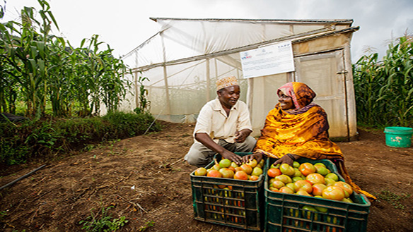 AGRICULTURAL AND RURAL EXTENSION MODELS FOR FRAGILE SOCIETIES