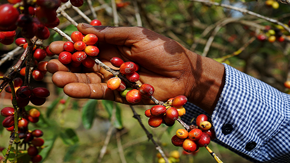 NEW PAN-AFRICAN TRADE DEAL CAN TRANSFORM THE CONTINENT'S FOOD SYSTEMS